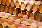 The barrel aging cellar with a man topping up wine (ouillage) in barrels with what looks like a garden watering can Chateau Paloumey Haut-Medoc Ludon Medoc Bordeaux Gironde Aquitaine France