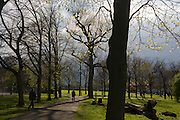 Spring growth on ash trees in Ruskin Park, a south London public space in Lambeth and Southwark.