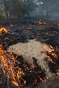 Prescribed Burn in longleaf pine forest passing over Gopher Tortoise Burrow<br /> The Orianne Indigo Snake Preserve<br /> Telfair County, Georgia<br /> USA