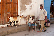 A boy with his goats in Stone Town on 6th December 2008 in Zanzibar, Tanzania. Zanzibar is a small island just off the coast of the Tanzanian mainland in the Indian Ocean. In part due to its name, Zanzibar is a travel destination of mystical reputation, known for its incredible sealife on its many reefs, the powder white coral sand beaches and the traditional cultivation of spices.