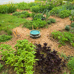 Basil and more in the herb garden at the Oakland House Seaside Resort in Brooksville, Maine.  Blue Hill Peninsula.  East Penobscot Bay.