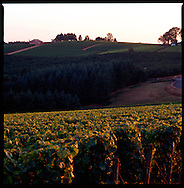 View of the vineyards at Domaine Drouhin, Dundee, Oregon