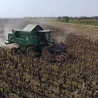 Sunflower harvest is in progress with an agriculture machine on a field in Mezobereny, Hungary on Sept. 21, 2020. ATTILA VOLGYI