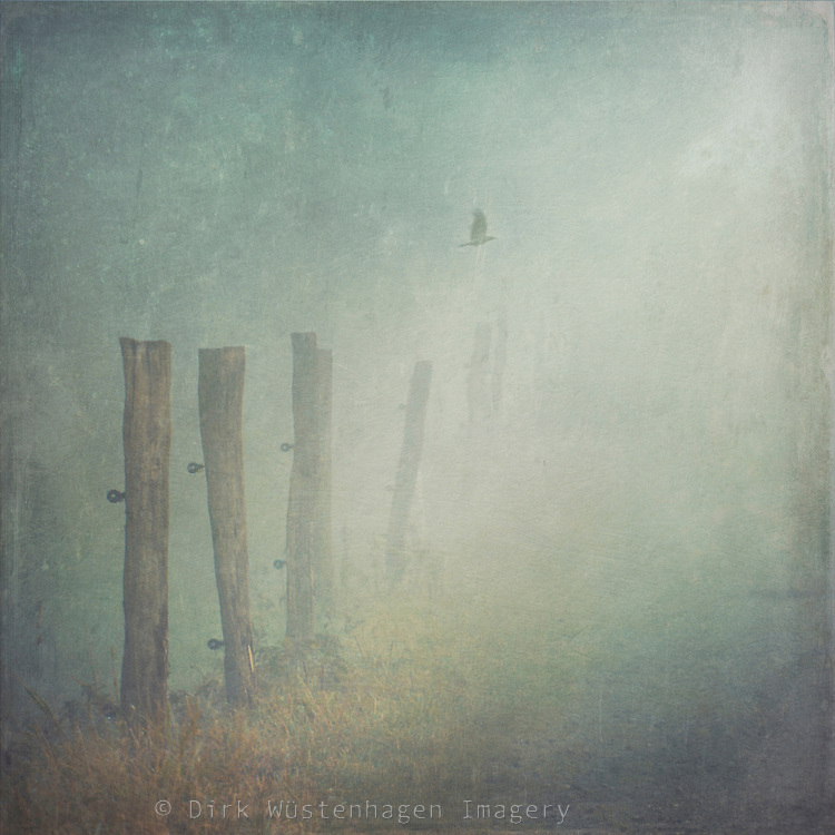 Rural path on a foggy day.<br /> Prints: http://society6.com/DirkWuestenhagenImagery/Vanishing-World_Print