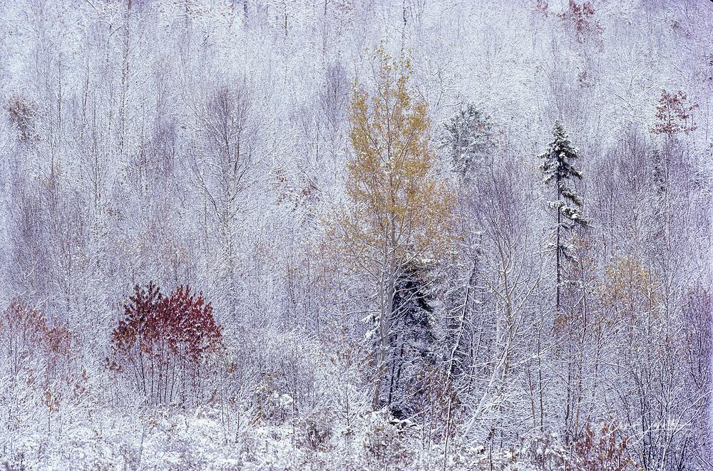 Autumn snow storm with autumn trees on a hillside, Greater Sudbury, Ontario, Canada