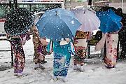 TOKYO, JAPAN - 14 JANUARY 2013 - Oimachi, Strong storm of snow during the Seijin no Hi, the day to become adult. The 18 years old young woman wears the kimono 's ceremony and walk in the snow. [FR] Une tempete de neige s'est abatue sur la ville de Tokyo. Le 14 janvier est le Seijin no Hi, le jour du passage à l'âge adulte. Les Japonaises porte le kimono de cerémonie ainsi que la cape en fourrure ou en plume blanche