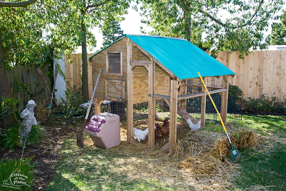 Chicken coop in backyard of house in Los Angeles, California, USA