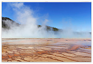 Steam is rising from the Grand Prismatic Spring into a deep blue sky at the The Midway Geyser Basin, Yellowstone National Park, Wyoming, USA