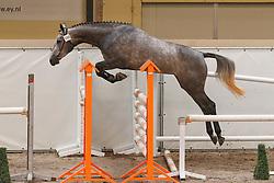196 - Cilanta<br /> KWPN Paardendagen Ermelo 2010<br /> © Dirk Caremans