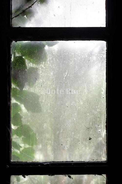 soot covered dirty window with leaves growing on the outside