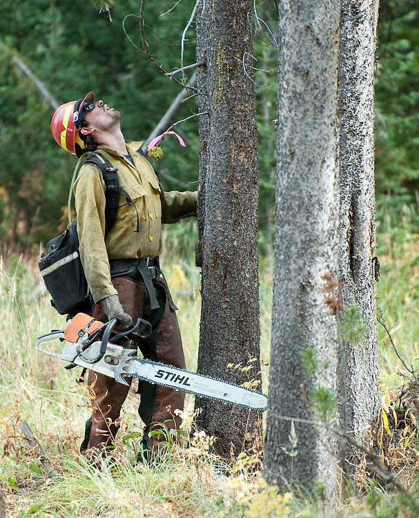 PRICE CHAMBERS / NEWS&GUIDE<br /> A firefighter looks up a tree he will cut down in Leeks Canyon on Tuesday, working to removing dead timber from the fire line.
