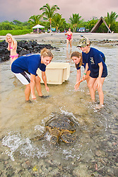 Students from Hawaii Preparatory Academy (HPA) releasing Green Sea Turtle, Chelonia mydas, after the extensive examination and tagging & marking process for the U.S. Marine Turtle Research, organized by researcher George Balazs PhD, NOAA National Marine Fisheries Service (NMFS), HPA students and teachers (NOAA/HPA Marine Turtle Program), and ReefTeach volunteers at Kaloko-Honokohau National Historical Park, Kona Coast, Big Island, Hawaii, USA, Pacific Ocean