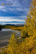 Autumn hues along the North Fork Flathead River in Glacier National Park, Montana, USA