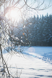 Winter Landscape with Snow Covered branches, Bavaria, Germany