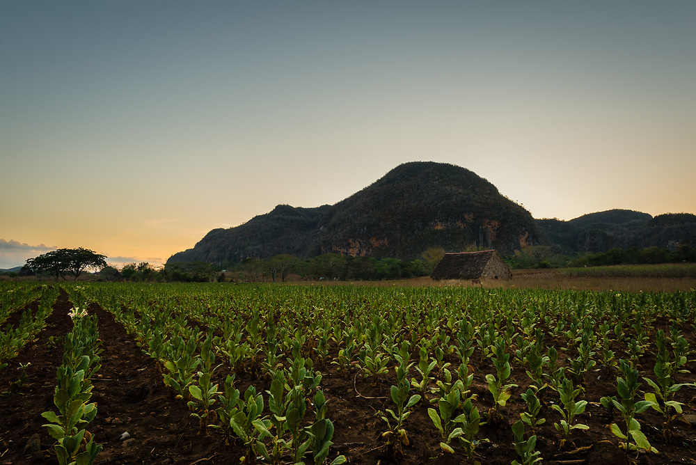 Tobacco farm in Vinales Valley at sunset