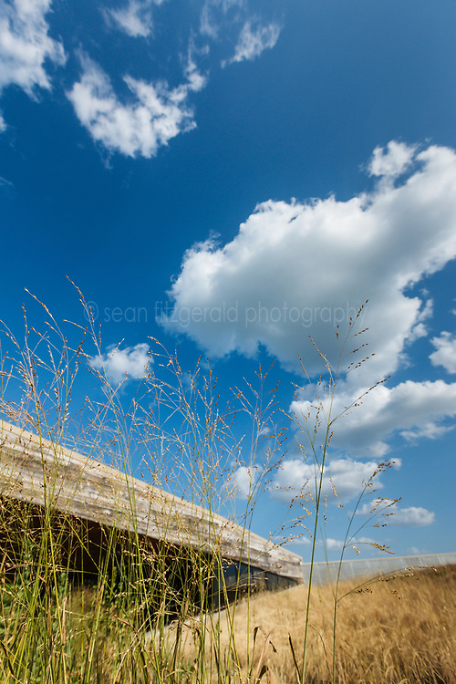 Native Grasses in summer planted on green roof, Trinity River Audubon Center, Dallas, Texas, USA.