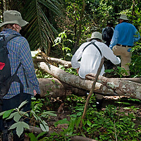 Adventurous hikers trek through the Amazon Jungle near the Yanayacu River in Peru's Amazon Jungle.