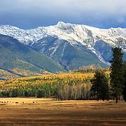 Swan Mountain Range, near Condon, Montana