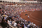 A traditional encierro, or taunting of the bulls by local residents at the annual wine harvest festival in Logroño, Spain. This takes place in the municipal bullring after the bulls run through the streets early every morning during the festival.