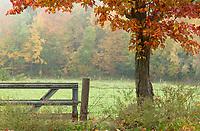 Fall foliage through the fog at Ramblin' Vewe Farm in Gilford on Monday morning.  (Karen Bobotas/for the Laconia Daily Sun)