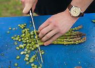 Cohasset, MA 05/11/2013.Chef Evan Gaudreau slices asparagus as he helps prepare Saturday's farm to table dinner..Alex Jones / www.alexjonesphoto.com
