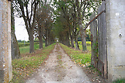 tree lined dirt drive way to a chateau graves bordeaux france
