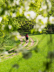 Woman hiking on footpath through forest near Mondhalde, Baden-Wuerttemberg, Germany