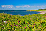 Roses along the St. Lawrence River<br />Island of L'Isle-Verte <br />Quebec<br />Canada