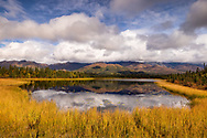 Fall colors surround this kettle pond in Wrangell-St. Elias National Park in Southcentral Alaska. Afternoon.