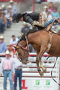 Rookie Saddle Bronc rider Dalton Rixen hangs on during his ride at the Cheyenne Frontier Days rodeo at Frontier Park Arena July 24, 2015 in Cheyenne, Wyoming. Frontier Days celebrates the cowboy traditions of the west with a rodeo, parade and fair.