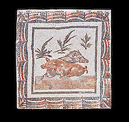 3rd century Roman mosaic panel of a boar and a sow lying down. From Thysdrus (El Jem), Tunisia.  The Bardo Museum, Tunis, Tunisia. Black background .<br /> <br /> If you prefer to buy from our ALAMY PHOTO LIBRARY  Collection visit : https://www.alamy.com/portfolio/paul-williams-funkystock/roman-mosaic.html - Type -   Bardo    - into the LOWER SEARCH WITHIN GALLERY box. Refine search by adding background colour, place, museum etc<br /> <br /> Visit our ROMAN MOSAIC PHOTO COLLECTIONS for more photos to download  as wall art prints https://funkystock.photoshelter.com/gallery-collection/Roman-Mosaics-Art-Pictures-Images/C0000LcfNel7FpLI