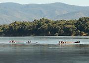 Hippopotamus pod in lower Zambezi River in Mana Pools National Park, Zambia