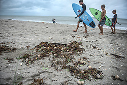 October 7, 2016 - Florida, U.S. - Surfers walk by exposed turtle eggs at Jupiter Beach Park Friday morning. (Credit Image: © Melanie Bell/The Palm Beach Post via ZUMA Wire)