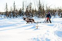Per-Anders Nutti sledding