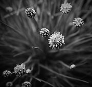 Anne Edgar Photography