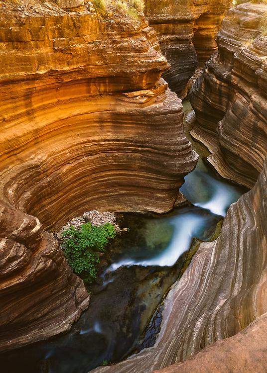 Deer Creek Canyon, June, Grand Canyon National Park, Arizona, USA