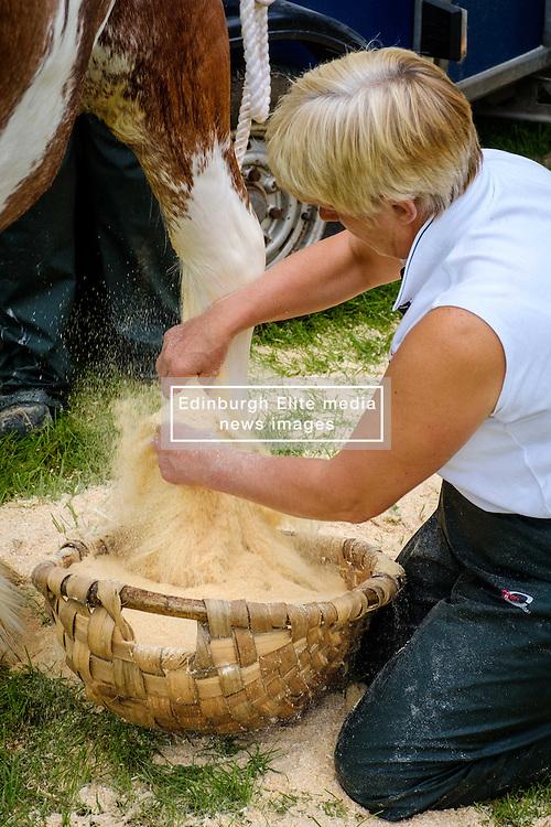 Biggar, South Lanarkshire, Scotland 23 July 2016<br /> <br /> Preparing horses for showing.<br /> <br /> <br /> (c) Andrew Wilson   Edinburgh Elite media