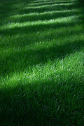 Close up detail of a patch of lush new grown green grass in London, England, United Kingdom.
