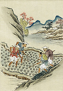 Workers cultivating rice in a paddy field. 19th century Chinese print on silk.