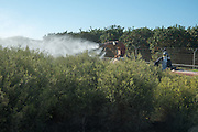 farmer in tractor sprays pesticide over crops in a nonorganic field Photographed in Israel