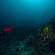 Dive Spot: Maya Reef