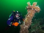 Shipwreck, Montauk