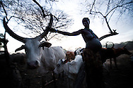 Akul Nadai tends to her cattle at dusk in a remote cattle camp in Jonlgei state South Sudan.  For many South Sudanese tribes, cattle are the most important thing on earth and worth dying for.  This has caused presistent conflict and clashes over time. Women are often valued less than cattle.