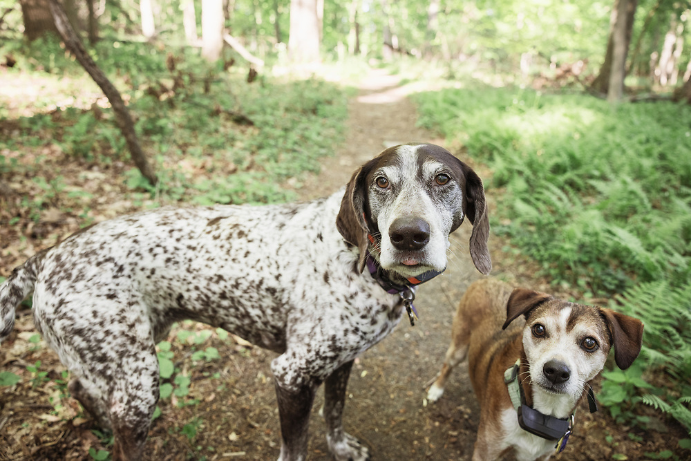 2 dogs on a hiking trail in the woods