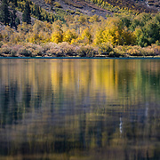 The Fall season in the Eastern Sierras is one of the most beautiful seasons to visit. The Aspens reflect in the water of Parker Lake in the Eastern Sierras.