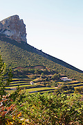 The Cassis cliff, the sea and vineyards on the slope Cassis Cote d'Azur Bouches du Rhone France