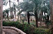 Palm trees and farmland at small irrigated oasis at Aqaba, Jordan, 1998