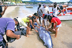 Kids Tv Show With Blue Marlin