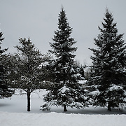 Trees by the roadside at the Ochiichagwe'Babigo'Ining Ojibway Nation reserve (also known as the Dalles First Nation) in Northern Ontario, Canada on 20 December 2016.