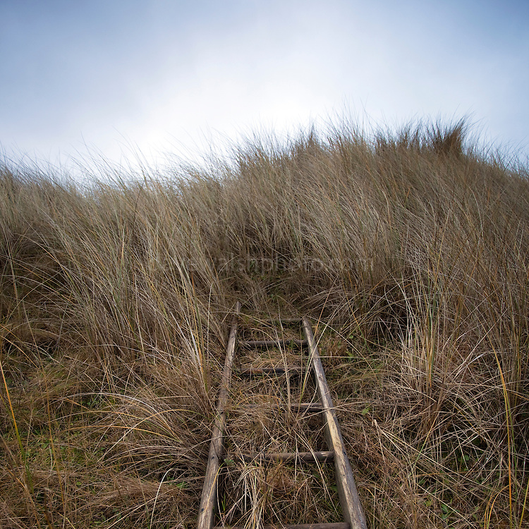 Abandoned ladder in the Marram Grass, north end of Bull Island, Dublin, 7 February 2010.